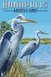 Annapolis  Maryland - Blue Herons