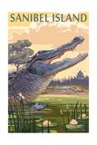 Sanibel Island  Florida - Alligator