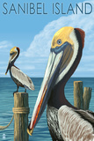 Sanibel Island  Florida - Pelican