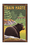 Twain Harte  California - Black Bear in Forest