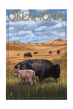 Oklahoma - Buffalo and Calf