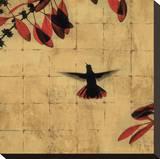 Colibri II