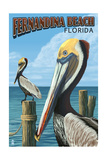 Fernadina Beach  Florida - Brown Pelican