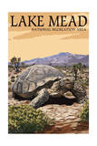 Lake Mead - National Recreation Area - Tortoise