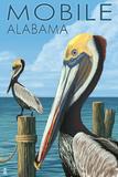 Brown Pelican - Mobile  Alabama