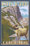 Estes Park  Colorado - Big Horn Sheep