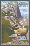 Glacier National Park  Montana - Big Horn Sheep