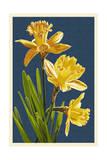 Daffodils - Blue Background