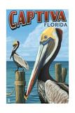 Captiva  Florida - Brown Pelican