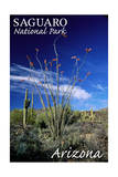 Saguaro National Park  Arizona - Cactus and Plants