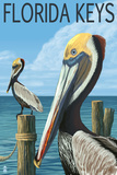 Florida Keys  Florida - Brown Pelican
