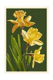 Daffodils - Green Background