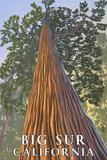 Big Sur  California - Tree Looking Up