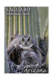 Saguaro National Park  Arizona - Owl and Babies
