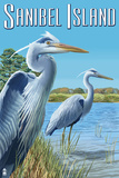 Blue Heron - Sanibel Island  Florida