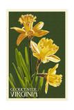 Gloucester  Virginia - Daffodil