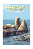 Carpinteria  California - Sea Lions