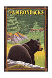 The Adirondacks - Black Bear in Forest