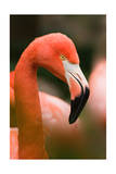 Flamingo Up Close