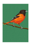 Oriole and Branch