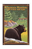 The Adirondacks - Lake Placid  New York - Black Bear in Forest