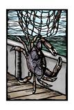 Dungeness Crab - Scratchboard
