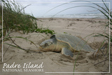 Padre Island National Seashore - Kemp's Ridley Sea Turtle Hatching