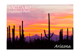 Saguaro National Park  Arizona - Orange and Pink Sunset