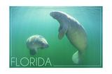 Florida - Manatees Underwater