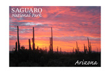 Saguaro National Park  Arizona - Pink Sunset