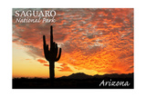 Saguaro National Park  Arizona - Orange Sunset