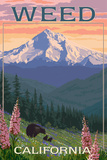 Weed  California - Bear and Spring Flowers
