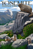 Yosemite National Park  California - Marmots