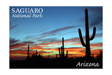 Saguaro National Park  Arizona - Cactus Silhouettes