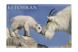 Ketchikan  Alaska - Mountain Goat and Kid