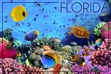 Florida - Underwater Coral