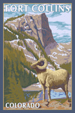 Fort Collins  Colorado - Big Horn Sheep