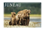 Juneau  Alaska - Grizzly Bear and Cubs