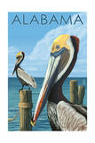 Alabama - Brown Pelicans