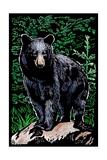 Black Bear - Scratchboard