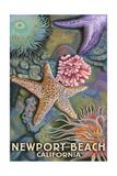 Newport Beach  California - Tidepools