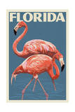 Florida - Flamingo