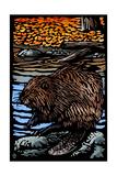 Beaver - Scratchboard