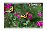 Montana - Butterfly and Flowers
