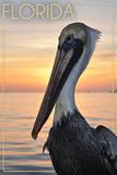 Florida - Pelican