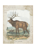 Woodland Stag II Reproduction d'art par Hugo Wild