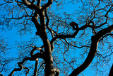 Tree Branches in Costa Rica Photo Poster Print