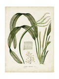 Tropical Grass I