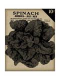 Vintage Seed Pack VI