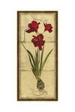 Amaryllis Panel II